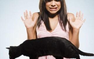 Зоофобия — страх перед животными — причины и лечение.