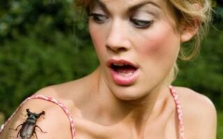 Инсектофобия — страх насекомых — причины и лечение.