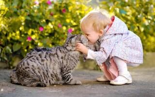 Айлурофобия — страх кошек