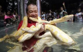 Офидиофобия — страх змей — причины и лечение.