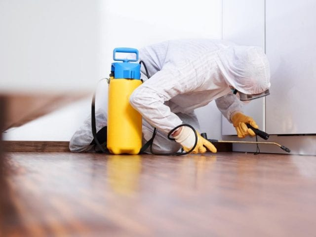 Постоянно использование химических средств защиты от насекомых может быть симптомом инсектофобии