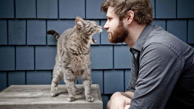 Боремся с боязнью кошек
