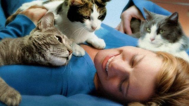 Девушка справился с боязнью кошек