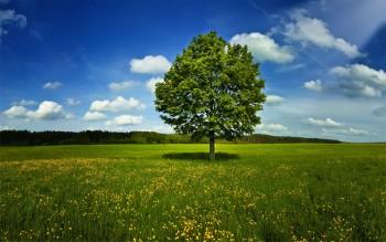 Дерево - символ развития стресса