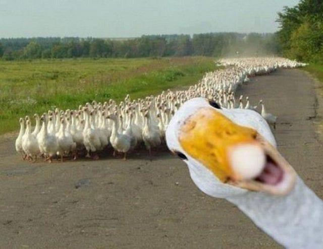 Избавляемся от боязни птиц