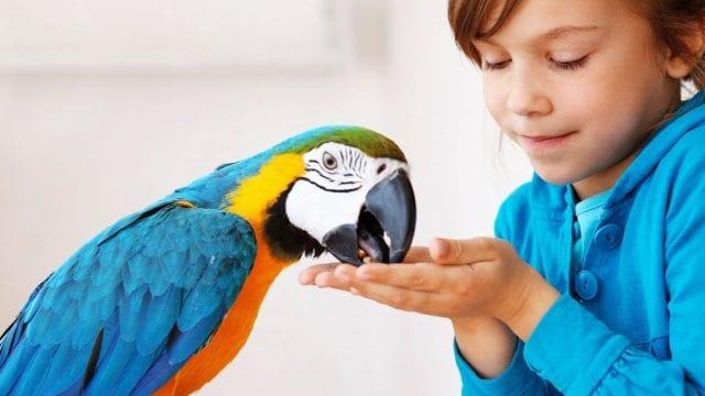 Постепенный контакт с птицами может помочь избавиться от орнитофобии